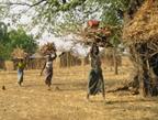 Corvée de bois réalisée par des femmes dans l'Atakora